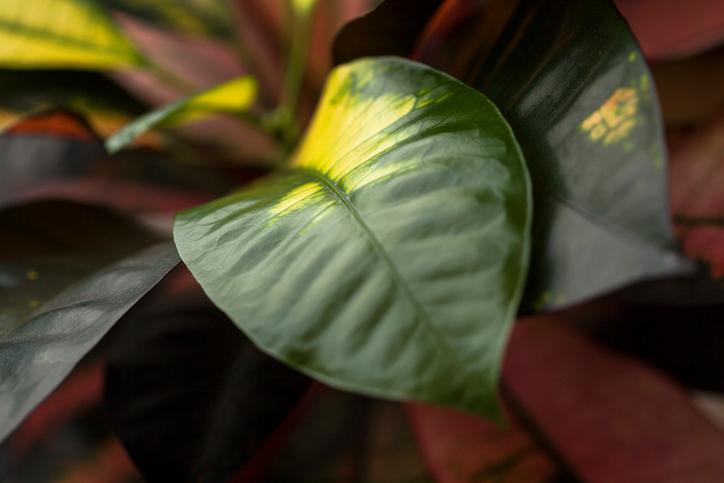Как спасти пожелтевшие листья комнатных растений