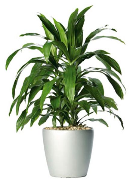 Самые полезные комнатные растения, которые очищают воздух в доме