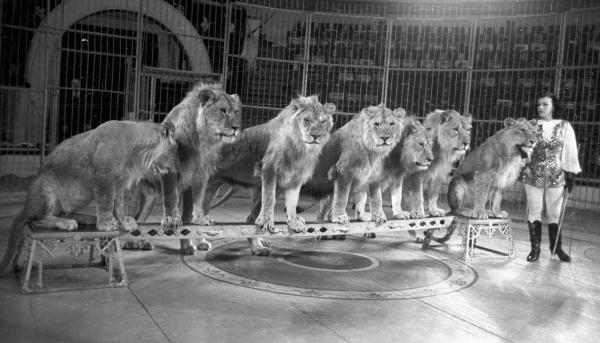 Ирина, матерь львов: первая укротительница в Стране Советов и её очень большие кошки