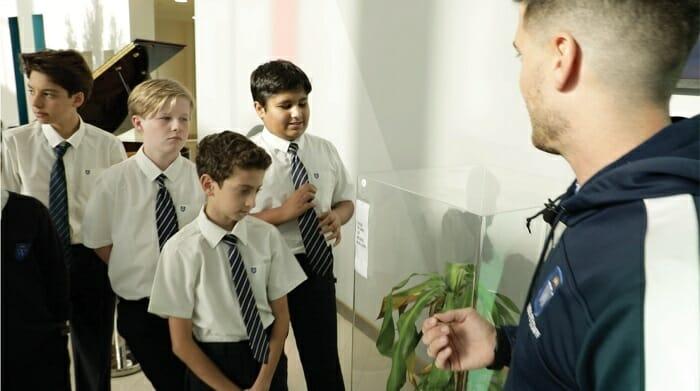 «Да чтоб тебя!» Школьники месяц ругали цветок, и он завял