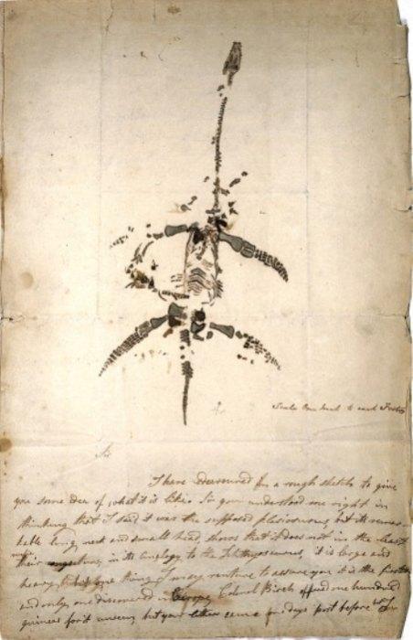 Письмо ирисунок Мэри Эннинг 1823 года объявляет оботкрытии ископаемого животного, теперь известного как плезиозавр.