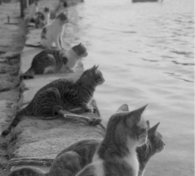 Коты ждут возвращения рыбаков