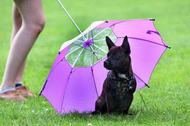 Зонтик отсолнца