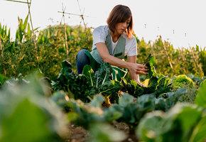 Сажайте и вырастет! 7 дачных примет, в которые верят даже опытные садоводы