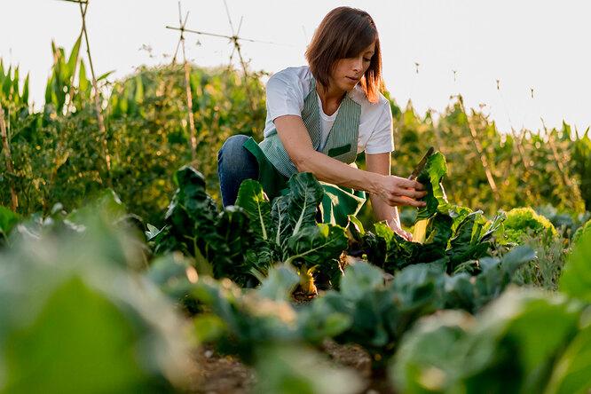 Сажайте ивырастет! 7 дачных примет, вкоторые верят даже опытные садоводы