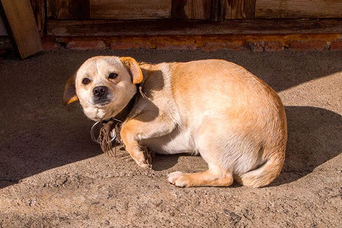 В Южной Корее спасли пса, который из-за издевательств неможет спать