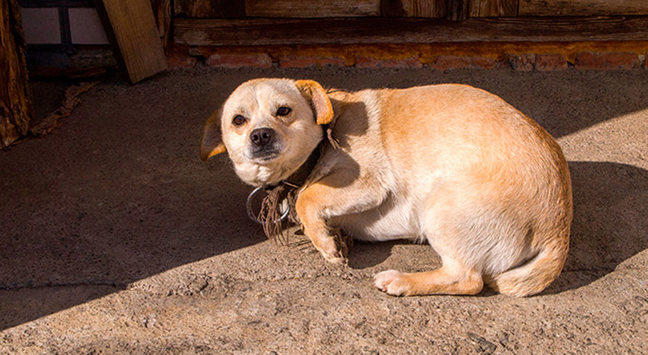 В Южной Корее спасли пса, который из-за издевательств больше неможет спать безкошмаров