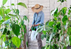Тля и огнёвка: как определить самых страшных вредителей сада?