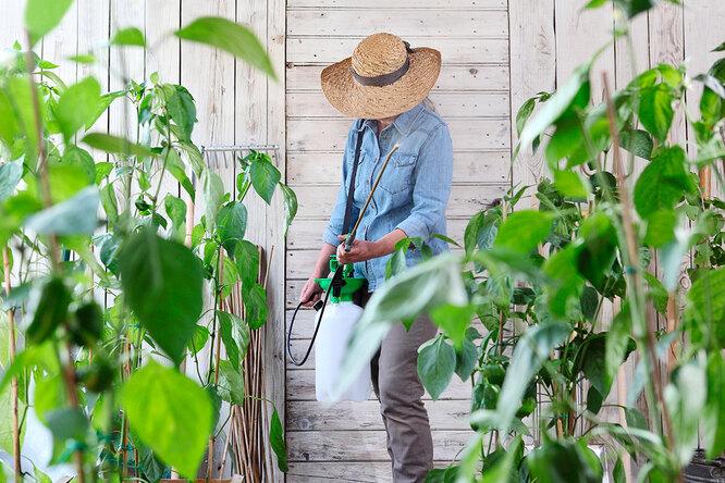 Тля иогнёвка: как определить самых страшных вредителей сада?
