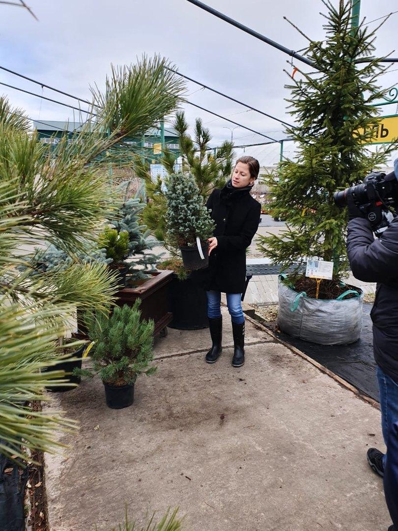 Как выбрать новогоднее дерево, которое не придется выбрасывать после праздника?