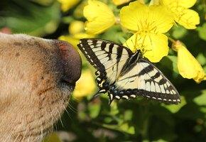 Милота через край: щенок познакомился с огромной бабочкой