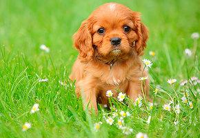 Пушистый друг: 10 пород собак, просто созданных для семей с детьми