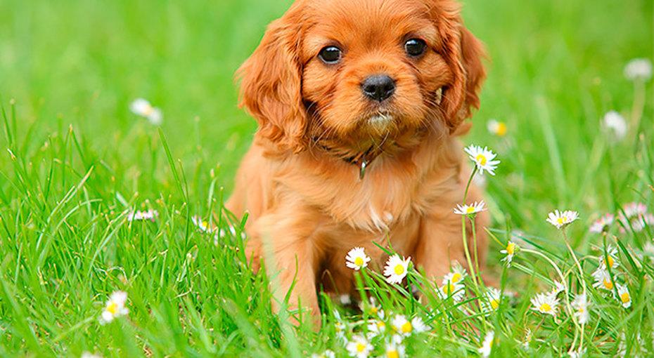 Пушистый друг: 10 пород собак, просто созданных длясемей сдетьми