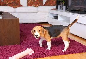 У соседей постоянно лает собака: что делать, куда жаловаться
