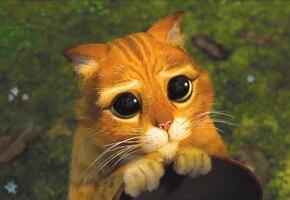 Очаровательные глазки! В Нидерландах живет точная копия котика из «Шрека»