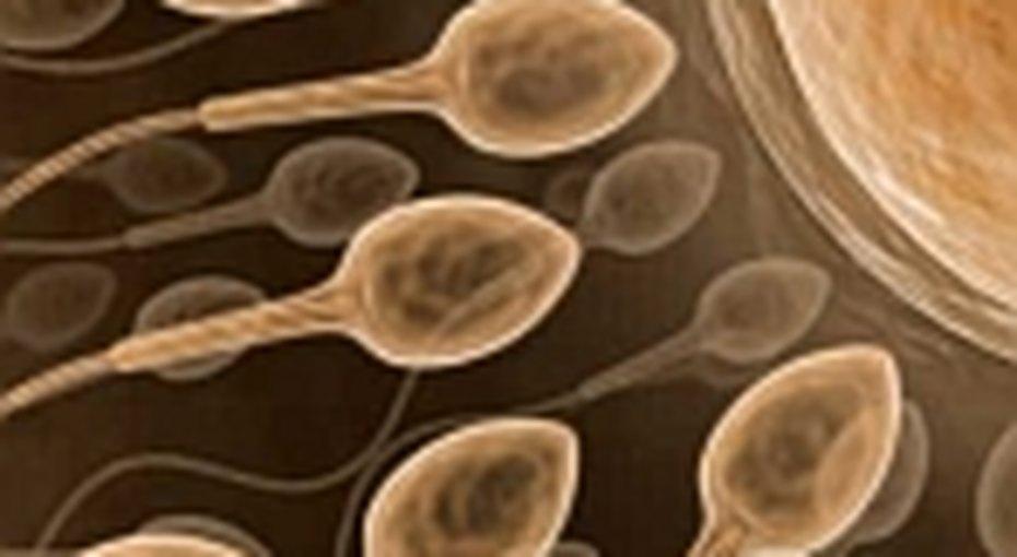 Здоровая сперма у мужчин