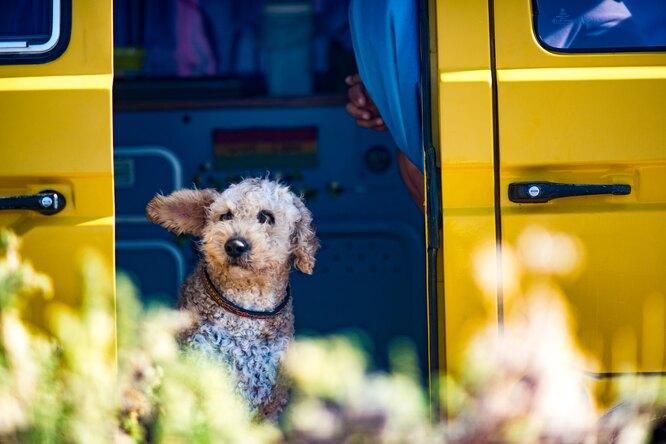 Собака каждый вечер ждёт автобус, чтобы сказать спасибо завозвращение друга
