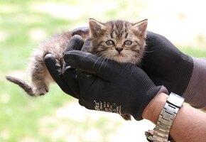 Пожарный спас троих котят благодаря телефону