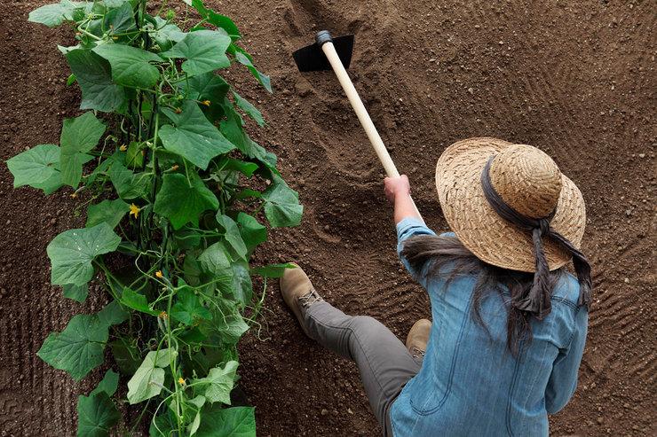 Как улучшить почву насадовом участке