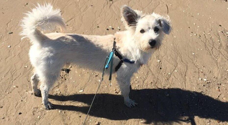Прохожий спас жизнь собаке, сделав ей искусственное дыхание напляже