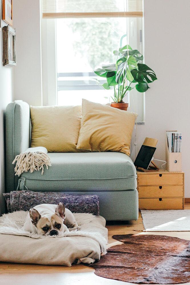 Болезни и вредители комнатных растений