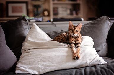 Котопёс — какие породы кошек характером похожи насобак