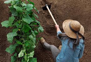 Дачные лайфхаки: как определить кислотность почвы и почему это важно?
