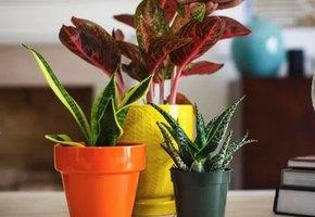 Не просить соседей: четыре отличных идеи поливки цветов на время отпуска