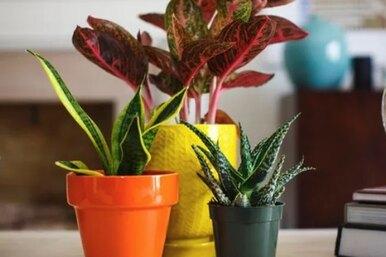 Не просить соседей: четыре отличных идеи поливки цветов навремя отпуска
