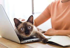 Работаете из дома? 7 способов занять кота, который не знает слова «удаленка»