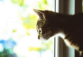 Между жизнью и смертью: прохожие чудом спасли застрявшего кота