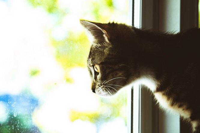Между жизнью исмертью: прохожие чудом спасли застрявшего кота