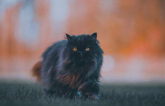 зловещий черный котик