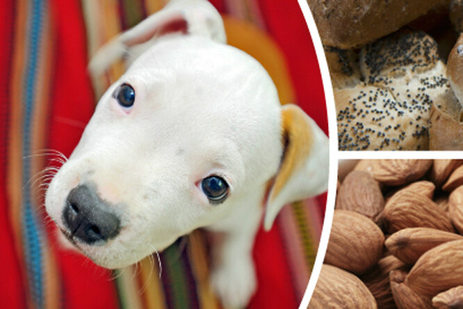 Куриные кости и10 других продуктов, которые нельзя давать собакам