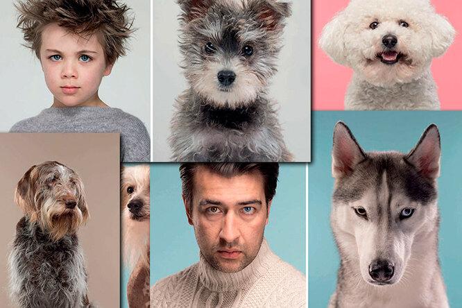 Эти фотографии доказывают: собаки похожи насвоих владельцев (ну или наоборот)