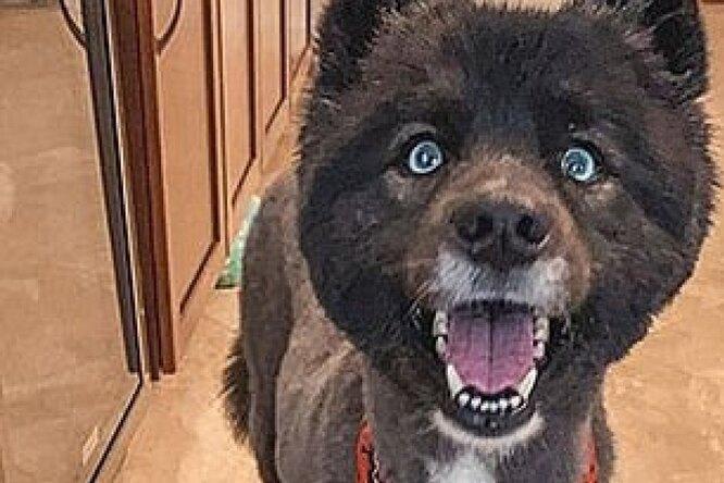 Бедная собачка! 14 провальных случаев, когда хозяева сами решили подстричь собак накарантине