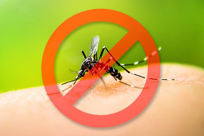 10 натуральных ароматов, которые непереносят комары