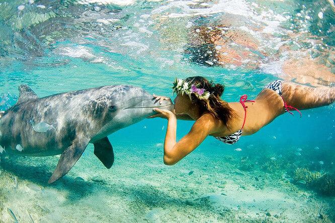 Игры с дельфинами. Ожидания