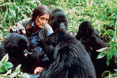 Отважная Диана. Ценой жизни она заставила мир полюбить горилл