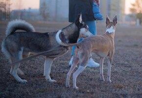 Виноваты собаки: японский светофор прослужил вдвое меньше, и вот почему