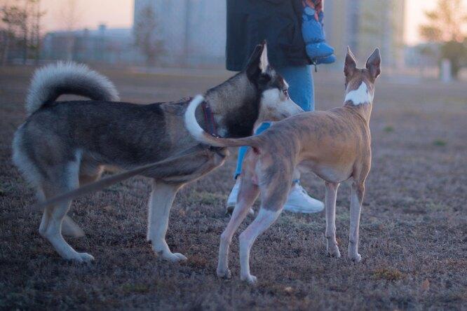 Виноваты собаки: японский светофор прослужил вдвое меньше, ивот почему