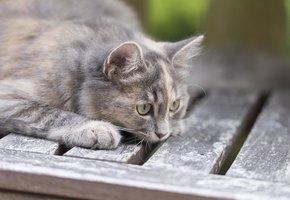 Кот спас беременную хозяйку от диабетической комы