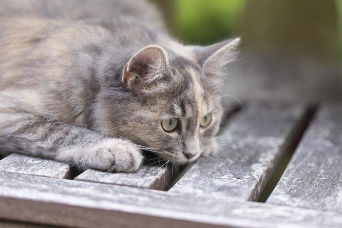 Кот спас беременную хозяйку отдиабетической комы
