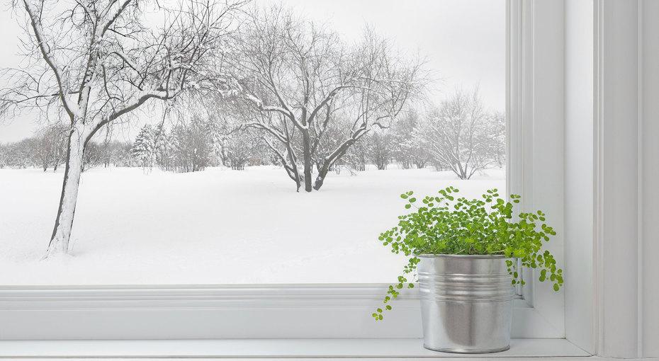 Как подготовить домашние растения кзиме: 8 советов длязаботливых цветоводов