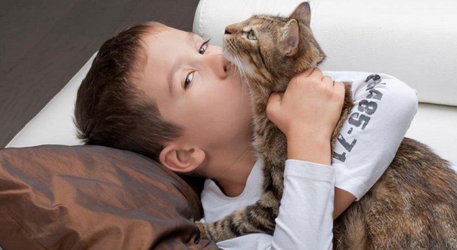 Бездомный кот спас потерявшегося мальчика вКалининградской области