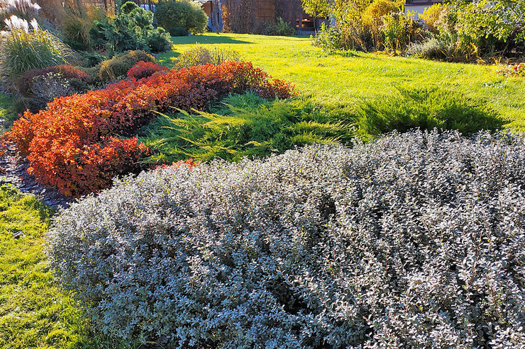 Что касается кустарников, осенью можно  обрезать только осеннецветущие виды.  Весеннецветущие – обрезают после цветения.