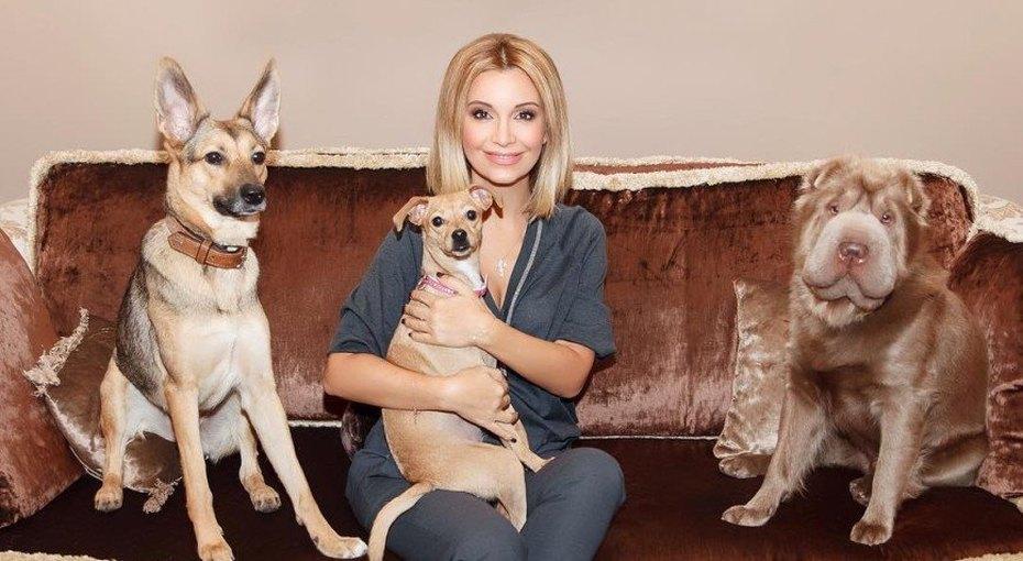 Ольга Орлова помогла спасти собаку отжестокого хозяина