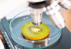 Как определить уровень пестицидов и чем они опасны