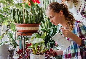 8 фруктов и овощей, которые можно вырастить на подоконнике