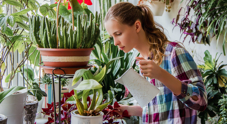 8 фруктов иовощей, которые можно вырастить наподоконнике